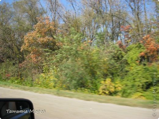 Люблю собирать шиповник. А осень у нас сейчас - просто сказочная!!!!! Тепло и буйство осенних красок.... фото 25
