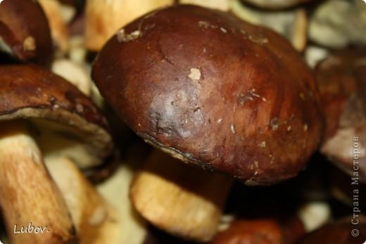 В этом году очень много польских грибов. Мы их и мариновали, и жарили, и уже не знали, что с ними делать.  Решили попробовать засолить холодным способом.  фото 3