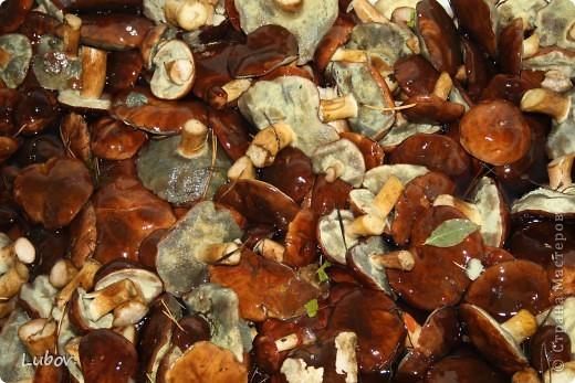 В этом году очень много польских грибов. Мы их и мариновали, и жарили, и уже не знали, что с ними делать.  Решили попробовать засолить холодным способом.  фото 6