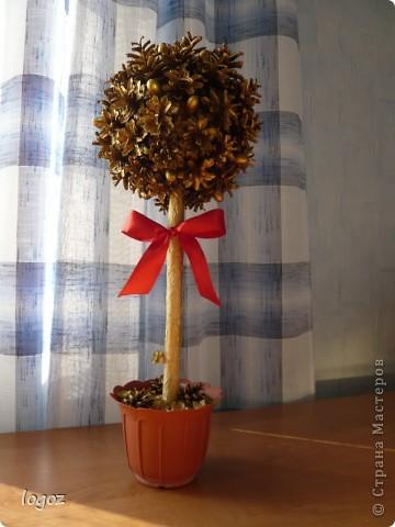 К празднику осени в детском саду появилось золотое дерево из шишек. фото 1