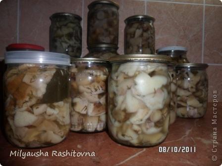 Вот что получилось из четырех ведер грибов... фото 2