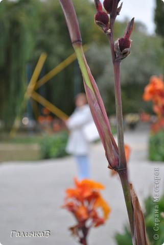 с 24 сентября по 1 октября были в Витязево (пригород Анапы). Сезон закончился, но кусочек лета мы все-таки поймали. фото 26