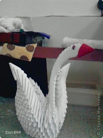 первая моя работа **лебедь****** фото 1