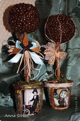 И снова кофейное дерево, да не одно :)  фото 1