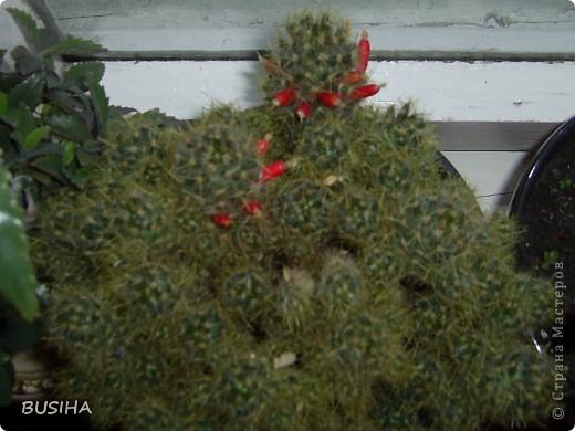 корзиночка в подарок. покрыта 2 раза ПВА+вода 1:1 фото 8