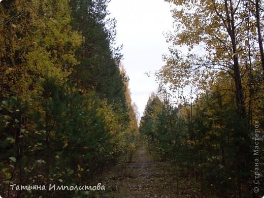 По уральским меркам вчера была хорошая,солнечная погодка и мы без промедления отправились в лес на прогулку фото 18