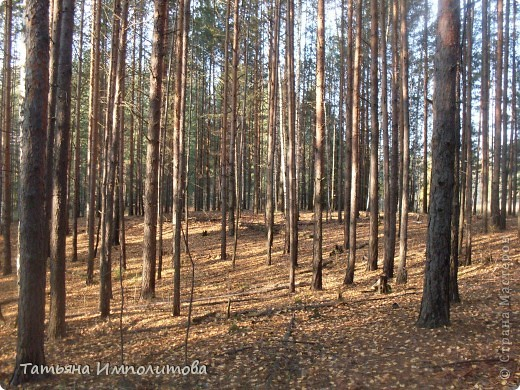 По уральским меркам вчера была хорошая,солнечная погодка и мы без промедления отправились в лес на прогулку фото 17