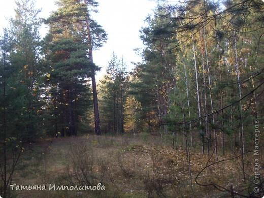 По уральским меркам вчера была хорошая,солнечная погодка и мы без промедления отправились в лес на прогулку фото 8
