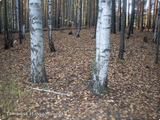 По уральским меркам вчера была хорошая,солнечная погодка и мы без промедления отправились в лес на прогулку фото 9