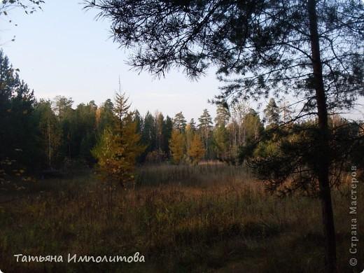По уральским меркам вчера была хорошая,солнечная погодка и мы без промедления отправились в лес на прогулку фото 15