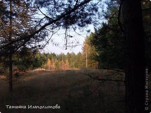 По уральским меркам вчера была хорошая,солнечная погодка и мы без промедления отправились в лес на прогулку фото 16