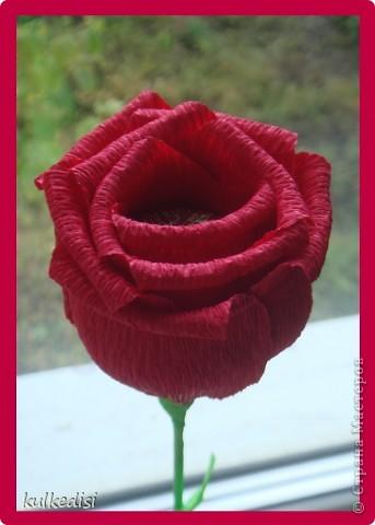 И снова розы=) Скоро день матери и знакомая девочка попросила сделать 5 розочек,чтобы подарить своим подружкам-мамам. В этот раз я использовала флористическую бумагу,в сравнении с бумагой для детского творчества и креповой бумагой эти розы пролучаются более жесткие,рельефные.  Но что меня покорило,так это цвет!Сразу захотелось такую помаду почему-то))) фото 1