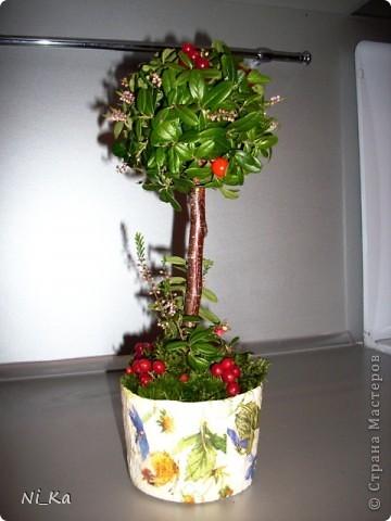 """""""Брусничное дерево"""""""