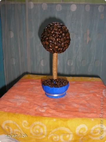 Решила сделать оригинальный подарок на день рождения. Это мое второе кофейное дерево и я дополнила его конфетами. И вот что получилось. фото 3