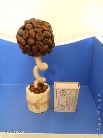 Маленькое кофейное дерево моей дочки. Ей сейчас 9 лет. С моей помощью сделала свое первое деревце фото 2