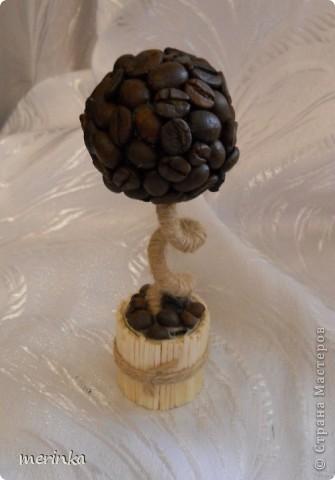 Маленькое кофейное дерево моей дочки. Ей сейчас 9 лет. С моей помощью сделала свое первое деревце фото 1