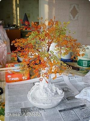 осеннее деревце  фото 4