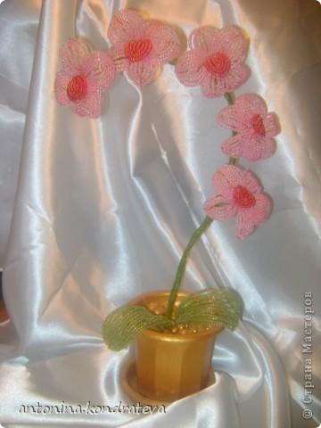 Цветы делала французским плетением. Из толстой проволоки сделала стебель, к нему прикрепила цветы. Обмотала его флористической лентой. Пластиковый вазон покрасила акриловой краской под бронзу. Закрепила в вазоне орхидею с помощью гипса. Гипс задекорировала морскими камешками, и тоже их покрасила.