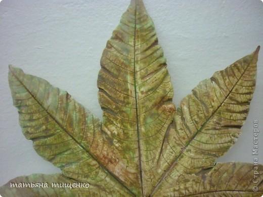 Болела все лето, а когда выздоровела - больших фактурных листьев для отливки из гипса уже ни каких нет . Спасибо клещевина спасла . Из большелистных растений одна она пока дает отпор осени . фото 3