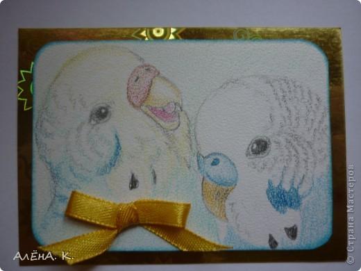 Если Алине понравятся эти попугайчики, то они отправятся к ней. Фотографии только в осеннем свете получаются темноватыми.  Нарисована сладкая парочка акварельными карандашами. Рисовала по мотивам фото из интернета, столько позитива в этих птичках, одно удовольствие рисовать))) Правда, забыла спросить, какую породу она предпочитает) Нарисовала своих любимых, волнистых) фото 1