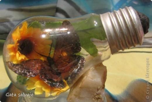 Наконец-то и мне удалось добыть перегоревшую лампочку. Теперь в ней поселилась бабочка. фото 1