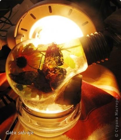 Наконец-то и мне удалось добыть перегоревшую лампочку. Теперь в ней поселилась бабочка. фото 4