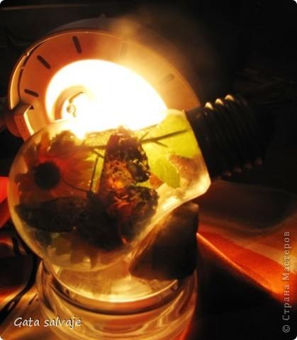 Наконец-то и мне удалось добыть перегоревшую лампочку. Теперь в ней поселилась бабочка. фото 5