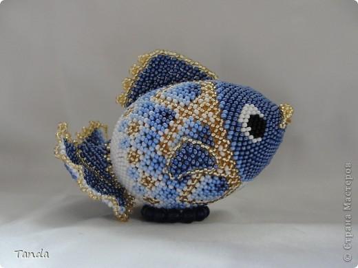 Вот и у меня рыбка завелась фото 2