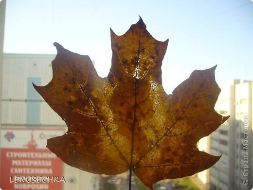 Осенняя пора.... фото 1