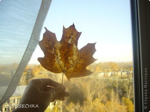 Осенняя пора.... фото 2