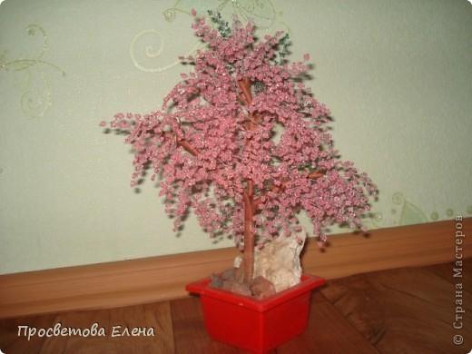цветущая сакура фото 1