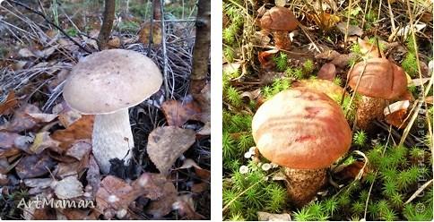 Вот такие грибочки у нас с дочей (2 года) выросли. фото 4