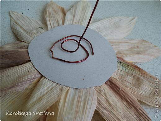 Дорогие мастера и мастерицы, осень -пора когда хочется сотворить что-нибудь из природного материала. Вот и я на страницах интернета увидела цветы из початков кукурузы и не удержалась. Знакомая принесла мне исходный материал от кукурузы. Сперва вырезала круг картона нужного размера (хотелось больших цветов подсолнуха для напольной вазы), вырезала из початков лепестки и наклеила их в 2 ряда, можно и больше по желанию. В центр наклеила кофе и промежутки посыпала манкой, которую потом немного подкрасила. фото 2
