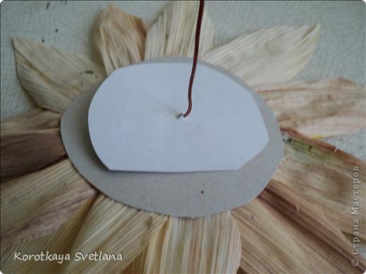 Дорогие мастера и мастерицы, осень -пора когда хочется сотворить что-нибудь из природного материала. Вот и я на страницах интернета увидела цветы из початков кукурузы и не удержалась. Знакомая принесла мне исходный материал от кукурузы. Сперва вырезала круг картона нужного размера (хотелось больших цветов подсолнуха для напольной вазы), вырезала из початков лепестки и наклеила их в 2 ряда, можно и больше по желанию. В центр наклеила кофе и промежутки посыпала манкой, которую потом немного подкрасила. фото 3