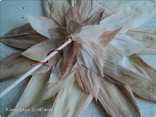 Дорогие мастера и мастерицы, осень -пора когда хочется сотворить что-нибудь из природного материала. Вот и я на страницах интернета увидела цветы из початков кукурузы и не удержалась. Знакомая принесла мне исходный материал от кукурузы. Сперва вырезала круг картона нужного размера (хотелось больших цветов подсолнуха для напольной вазы), вырезала из початков лепестки и наклеила их в 2 ряда, можно и больше по желанию. В центр наклеила кофе и промежутки посыпала манкой, которую потом немного подкрасила. фото 5