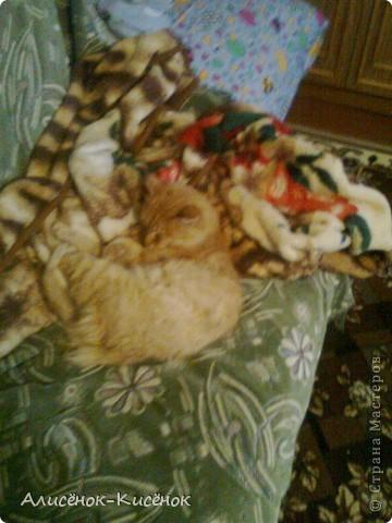 Котики на 1 полке. фото 6
