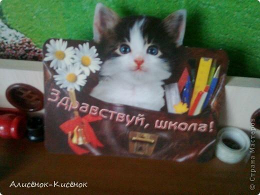 Котики на 1 полке. фото 7