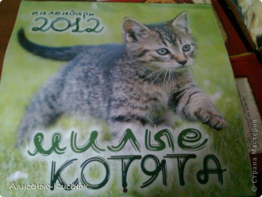Котики на 1 полке. фото 8