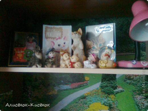 Котики на 1 полке. фото 1