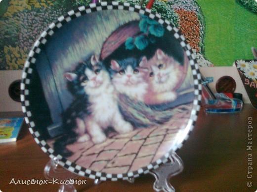 Котики на 1 полке. фото 10