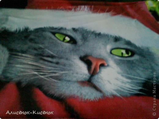 Котики на 1 полке. фото 16