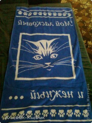Котики на 1 полке. фото 15