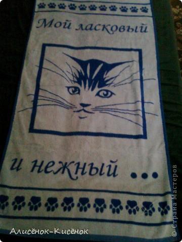 Котики на 1 полке. фото 14