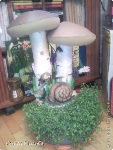Мои грибочки на окошке в детском саду... фото 3