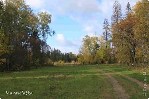 Осень, осень... фото 2