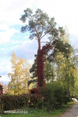 Осень, осень... фото 3