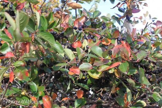 Осень, осень... фото 5