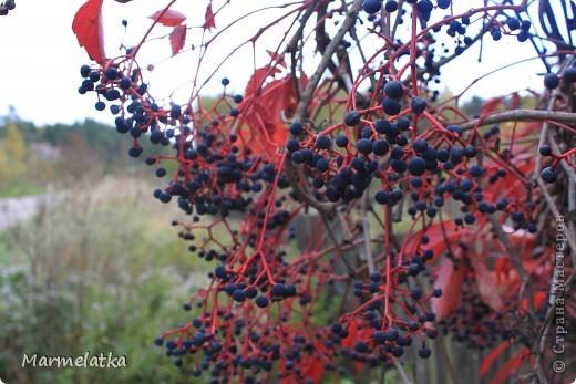 Осень, осень... фото 8