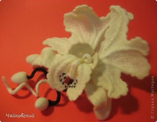 Орхидея катлея фото 1