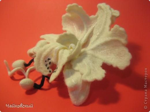 Орхидея катлея фото 2